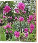 German Catchfly Pink Wood Print