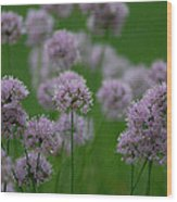 German Garlic Wood Print