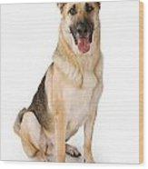 German Shepherd Dog Isolated On White Wood Print by Susan Schmitz