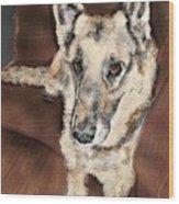 German Shepherd On Couch Wood Print