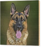 German Shepherd Portrait II Wood Print