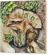 German Shepherd Pup Wood Print by Joy Reese