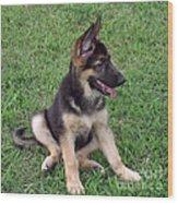 German Shepherd Pup Wood Print