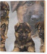 German Shepherd Puppy Collage Wood Print