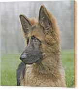 German Shepherd Puppy Wood Print