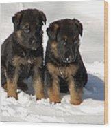 German Shepherd Pups Wood Print by Aimee L Maher Photography and Art Visit ALMGallerydotcom