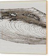 Gervillia Aviculoides Wood Print