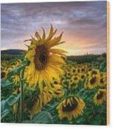 Get Sun Wood Print