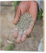 Ghanzi, Botswana- Fertilizer Pellets Wood Print
