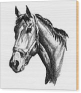 Ghazibella Thoroughbred Racehorse Filly Wood Print
