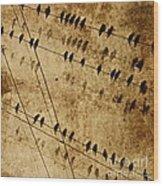 Ghost Birds On A Wire Wood Print by Deborah Talbot - Kostisin
