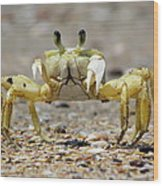 Ghost Crab Wood Print
