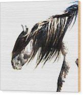 Ghost Horse Wood Print