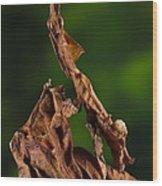 Ghost Or Dead Leaf Mantis Wood Print