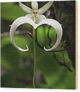 Ghost Orchid 2 Wood Print