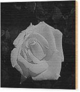 Ghost Rose Wood Print