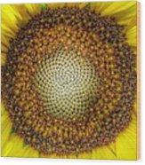 Ghost Sunflower Wood Print
