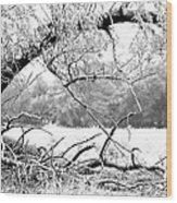 Ghost Tree 1 Of 3 Wood Print
