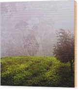 Ghost Tree In The Haunted Forest. Nuwara Eliya. Sri Lanka Wood Print