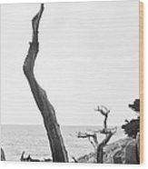 Ghost Tree Site Wood Print