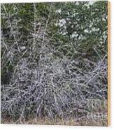 Ghost Trees 1 Wood Print