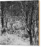 Ghostly Forest Wood Print
