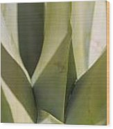 Giant Agave Abstract 7 Wood Print