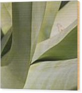 Giant Agave Abstract 8 Wood Print