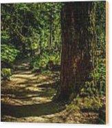 Giant Douglas Fir Trees Collection 2 Wood Print