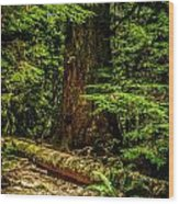 Giant Douglas Fir Trees Collection 3 Wood Print