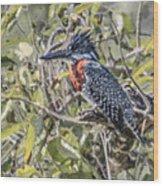 Giant Kingfisher Wood Print