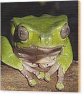 Giant Monkey Frog  Venezuela Wood Print