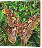 Giant Moth Wood Print