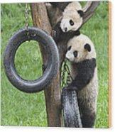 Giant Panda Cubs Wood Print