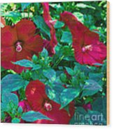 Giant Poppies Wood Print