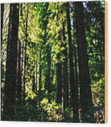 Giant Redwood Forest Wood Print