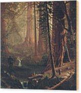 Giant Redwood Trees Of California Wood Print