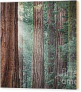 Giant Sequoias In Early Morning Light Wood Print