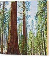 Giant Sequoias In Mariposa Grove In Yosemite National Park-california Wood Print