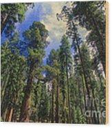 giant sequoias sequoiadendron gigantium yosemite NP Wood Print