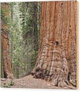 Giant Sequoias Wood Print