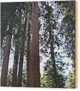 Giant Sequoias - Yosemite Park Wood Print