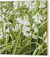 Giant Snowdrops Wood Print