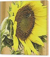 Giant Sunflower With Buds Wood Print