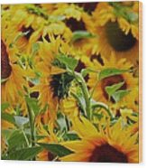 Giant Sunflowers Wood Print