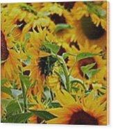 Giant Sunflowers Wood Print