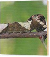 Giant Swallowtail Caterpillar Wood Print