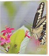 Giant Swallowtail II Wood Print
