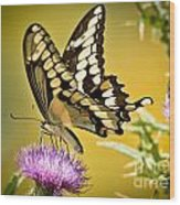 Giant Swallowtail On Thistle Wood Print