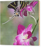 Giant Swordtail Butterfly Graphium Androcles On Orchid Wood Print by Robert Jensen